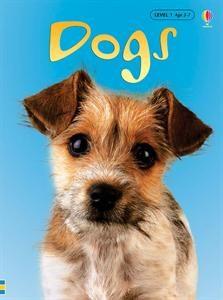 dogsir